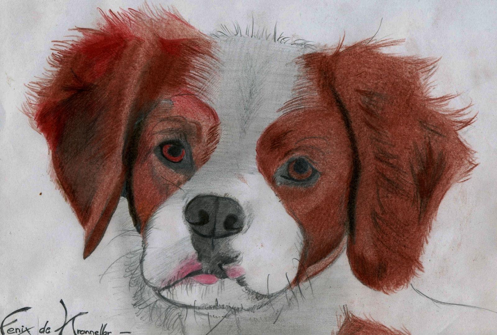 portrait de chien img030-1600x1200